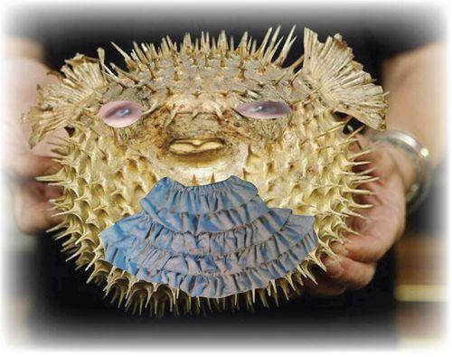 Puffer Fish 4