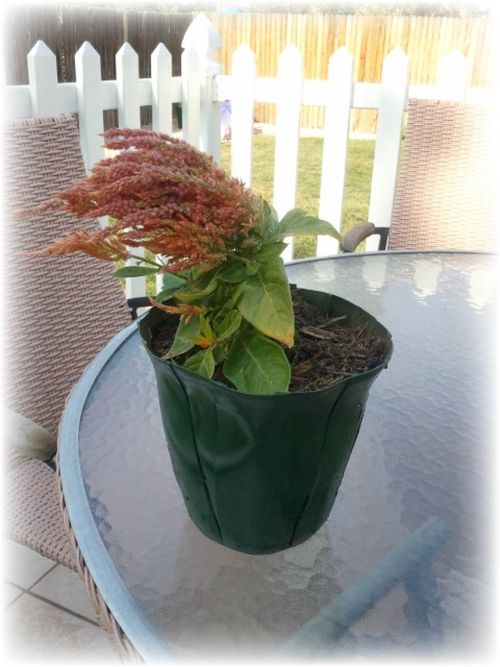 Upcycled creamer bottles into planting pot - Pic 9