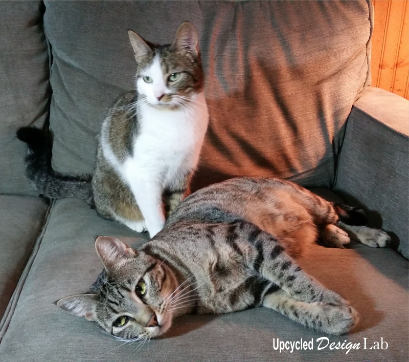 Pickle Juice Chair - The Cats -2